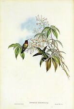 "1990 Vintage HUMMINGBIRD #131 ""RUBY THROATED"" STUNNING GOULD Art Lithograph"