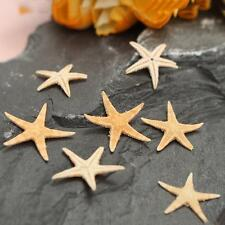 20PCS Natural Starfish Sea Star Craft For Micro Landscape Making Decoration New
