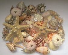 Assorted Mixed Seashells Set of 50 Starfish Urchins Scallops Quality Shells