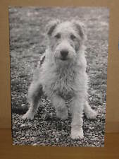 Dogs Dog single B/W postcard, Elliott Erwitt, phaidon press, photo paw raised