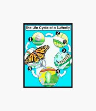 Life Cyle of the Butterfly Science  POSTER Chart Teacher Rescource CD6355