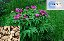 DR T&T 100g dry herbs Chi Shao (Radix Paeoniae Rubra)/Red Peony Root