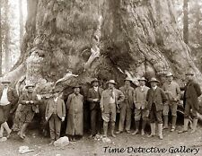 """Teddy Roosevelt at """"Grizzly Giant"""", Big Trees, California - Historic Photo Print"""