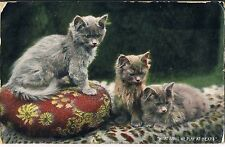WILDT & KRAY POSTCARD - KITTENS WHAT SHALL WE PLAY AT NEXT 1907 SELLY OAK