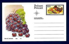 SOUTH AFRICA - SUD AFRICA - RSA - 1982 - Cart. Post. - Frutta locale: Uva rosata