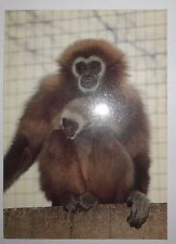 LONDON ZOO & WHIPSNADE PARK - GIBBON and BABY POSTCARD