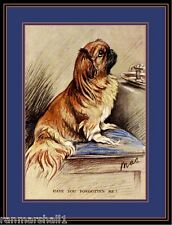 English Picture Print Pekingese Puppy Dog Dogs Begging Vintage Poster Art