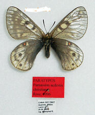 PARNASSIUS ACDESTIS CHRISTIANAE *PARATYP male A-*East TIBET