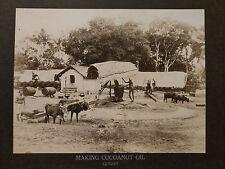 1900s PHILADELPHIA MUSEUM CABINET PHOTO MAKING COCOANUT OIL CEYLON