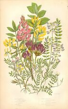 1860 Ca ANTIQUE BOTANICAL PRINT-ANNE PRATT- MILK VETCH,BIRD'S FOOT,SAINT FOIN