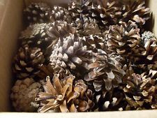 100 Lodge Pole Pine Cones - Small - Natural - Crafts and Decore