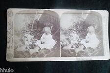 STA974 Scène de genre enfant chiots chiens Photo 1900 STEREO stereoview