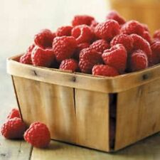 Fruit seed - RED RASPBERRY Rubus Idaeus Bush Seeds - Pack of 10 Seeds