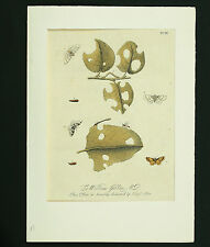 E. Albin Cobre Stich um 1720 con la mano color Insectos Copperplate Grabado