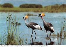 B98577 crowned crane grue a couronne africa  animals animaux