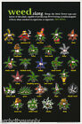 POSTER: MARIJUANA THEME: WEED - SLANG TERMS - FREE SHIPPING #FL3204S RP68 O