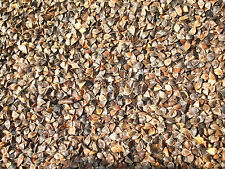 100 Buckwheat seeds Common Edible Cover Crop, Grain, Food Plot Fast Growth Seed