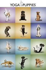 YOGA PUPPIES POSTER 61x91cm Dog Lovers Humour Wall Art NEW LICENSED