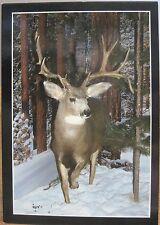 MT Postcard TROPHY MULE DEER Taxidermy Sleeping Giant Wildlife Museum Livingston