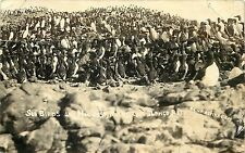 1907-18 Real Photo PC Guillemots Sea Birds Nor-East Rock of Cape Blanco Reef OR
