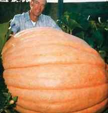 Organically Grown Dills Atlantic Giant Pumpkin 15 Seeds