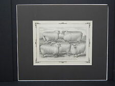 Sheep c1890 Matted Ready To Frame S3 #05 Yearling Cotswold Sheep