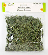 Green Reindeer Moss Dried Floral Arrangement 56 grams / 2 oz / 24 Cubic Inches