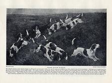 BASSET HOUND ORIGINAL VINTAGE DOG PRINT PAGE 1934 PACK OF BASSET HOUNDS HUNTING