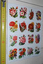 RARE PLANCHE 23 X 32 CHROMOS IMAGES ECOLE VOLUMETRIX 1955 FLEURS FLOWERS