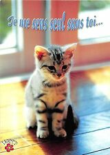 BF38753 je me sens seul sans toi cub  cat chat animal animaux