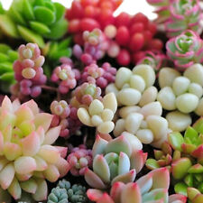 Desktops Potted plants Flowers Succulents Radiation protection Plant Seed