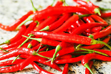 Very Hot Thai Chili Seed Long Red Pepper Organic Seed Vegetable Heirloom Fresh