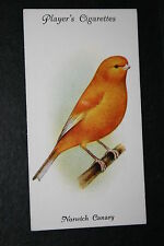 Norwich Canary     Vintage 1930's Illustrated Card   VGC