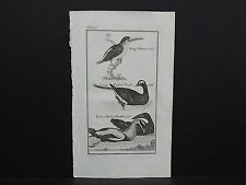Buffons Natural History 1792 Birds S1#07 King Fisher, Long-Tailed Duck