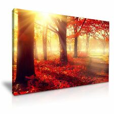 Large Red Forest Autumn Tree Sun Canvas Wall Art Picture Print 76cmx50cm