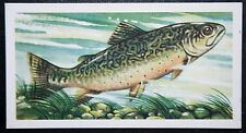 Speckled Trout   North American Freshwater Fish  Vintage Card  # VGC