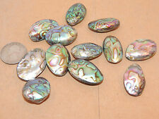One Drilled small Paua Abalone Shell Bead from New Zealand  (6703)