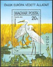 Hungary 1980 Great Egrets/Protected Birds/Conservation/Nature 1v m/s (b2512)