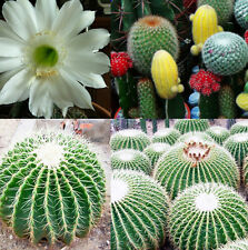 20pcs Mixture Of Cactus Flower Color Plant Beautiful Cactus Indoor Plant Seeds