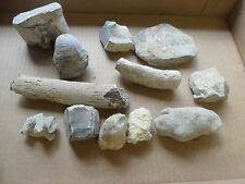 Lot of 12 Bone / Fish Fossils from Colorado ~ Free Ship~