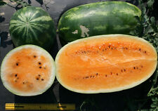 Watermelon Seeds - TENDERSWEET ORANGE - Large Super Sweet Fruit -10 Seeds