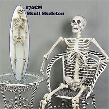 170cm Human Skeleton Life Size  Skull Full Body  Anatomy Model Halloween Medical