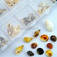 Nail Shell Conch For Acrylic Nail Art Tips Design decoration tool Accessories