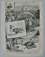 """Stier, Stierkampf  """"Stiergefecht"""" Stich, Holzstich nach Juan Loma 1884"""