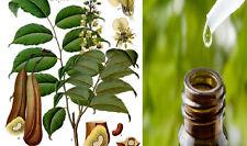 Ultra rare seeds / plants * Balsam of Peru -Myroxylon Balsamum * 3 fresh seeds