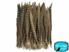 "Pheasant Feathers, 10-12"" Natural Ringneck Pheasant Tail Feathers - 10 Pieces"