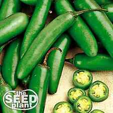 Serrano Chili Pepper Seeds - 100 SEEDS NON-GMO