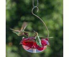 Droll Yankees RUBY SIPPER HANGING HUMMINGBIRD FEEDER, Free Shipping
