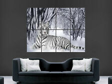 WHITE TIGER   LARGE WALL ART POSTER PICTURE  PRINT