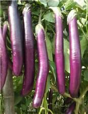 Vegetable seeds- Hybrid F1 BRINJAL LONG PURPLE